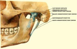 Артроз височно нижнечелюстного сустава у кота ородонтия сустава