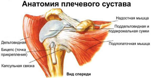 Остеохондроз плечевого сустава