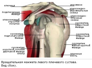 Ротаторная манжета плечевого сустава