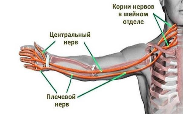 Ущемление нерва плечевого сустава мази при болях в плечевом суставе