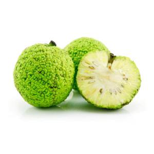 Лечебные свойства адамова яблока